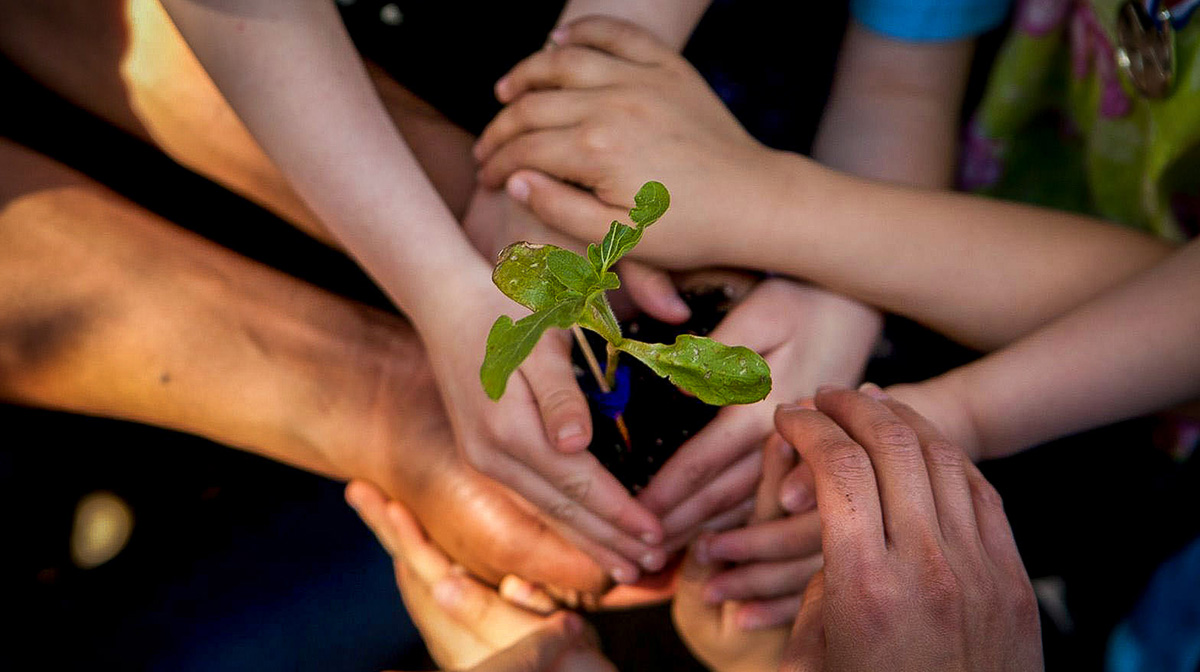 childrens' hands holding a seedling.